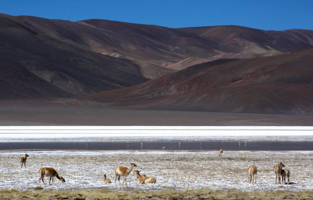 Laguna de Los Asparejos, Province de Catamarca, Argentine
