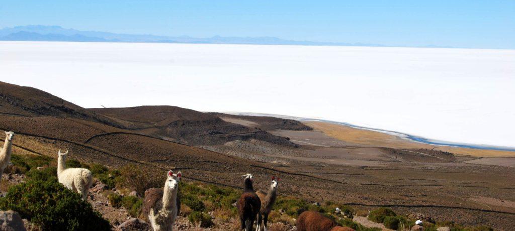 Salar d'Uyuni depuis le volcan Tunupa, Province du nord Lipez, Bolivie