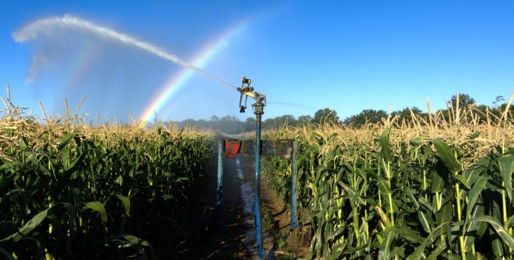 Culture de maïs, Gers, France