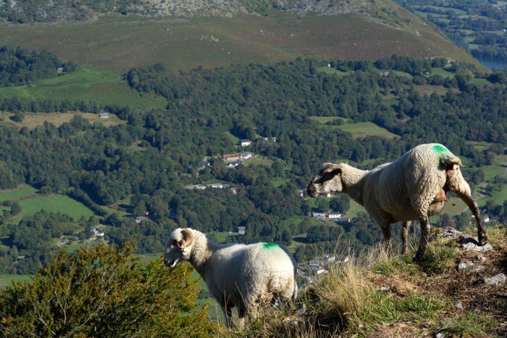 Paysages des Hautes Pyrénées, France